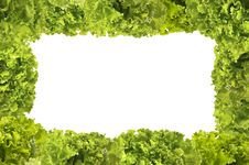 Free Lettuce Bunches Frame Stock Images - 14876324