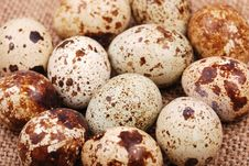 Free Photo Of The Quail Egg Stock Photography - 14876592