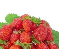 Free Strawberries Stock Photography - 14877632