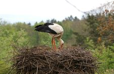 Free Large White Stork In The Nest Stock Images - 14878384