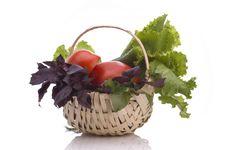 Free Fresh Herbage Stock Image - 14879181