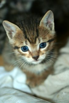Close Up Of Kitten Looking Into The Camera Lens Stock Photos