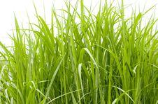 Free Grass Royalty Free Stock Image - 14879946