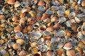 Free Sea Shells Royalty Free Stock Photography - 14887157