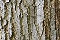 Free Tree Bark Texture Stock Photos - 14889683