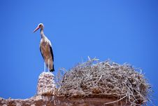 Free Single Storch Standing On Roof Royalty Free Stock Image - 14880756