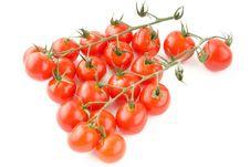 Free Shiny Tomatoes With Stem Stock Photo - 14881650