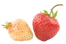 Free Mellow And Not Mellow Strawberry Royalty Free Stock Photography - 14881857