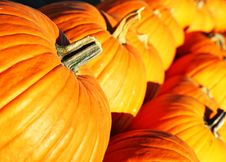 Free Large Pumpkins In A Row Stock Photography - 14882982