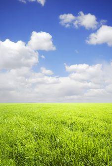 Free Green Field Stock Image - 14883801