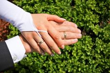 Free Wedding Rings On Hands Royalty Free Stock Photography - 14884327