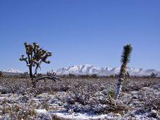 Desert In Snow Stock Images