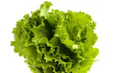 Free Salad Leaves Royalty Free Stock Photo - 14888345