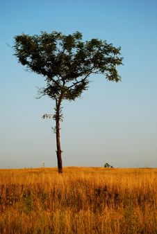 Free Lonely Tree Royalty Free Stock Image - 14888376