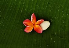 Free Red Plumeria And White Stone Royalty Free Stock Images - 14888549