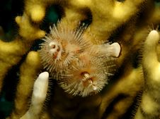 Free Christmas Tree Worm Stock Images - 14888634
