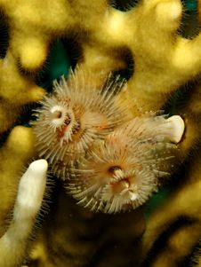 Free Christmas Tree Worm Royalty Free Stock Images - 14888639