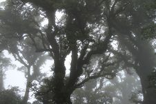 Free Fog Stock Photos - 14888743