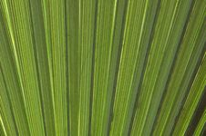 Free Palm Closeup Stock Photo - 14889160
