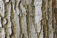 Free Tree Bark Texture Stock Photos - 14889683