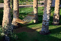 Free Hammock Under Palm Trees. Stock Photo - 14892710