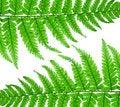 Free Fern Leaf Royalty Free Stock Photos - 14895678
