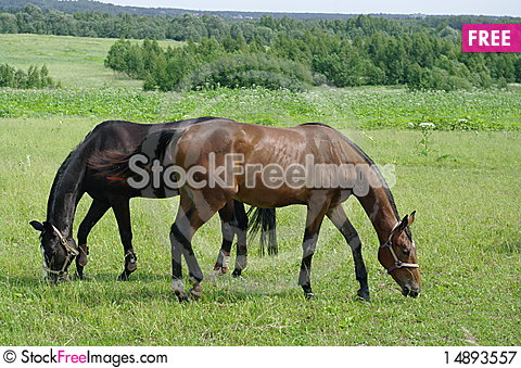 Free Two Horses Royalty Free Stock Photography - 14893557