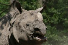 Free Plated Rhinoceros Royalty Free Stock Photography - 14890847