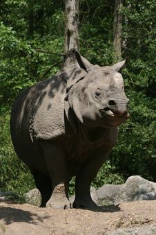 Free Plated Rhinoceros Stock Images - 14890864