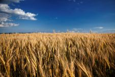 Free Within Fields Of Gold Stock Photos - 14890873