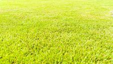 Free Grass Stock Photos - 14891033