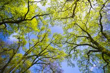 Free Treetops Stock Images - 14891384