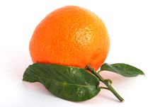 Free Tangerine Royalty Free Stock Photos - 14891948