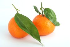 Free Tangerine Stock Photo - 14891960