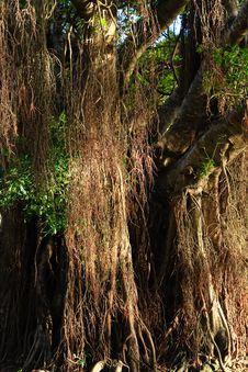 Free Rainforest Tree Stock Images - 14892024