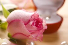Free Rose Stock Photo - 14892030
