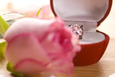 Free Rose Stock Photography - 14892042
