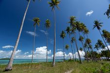 Free Beautiful Beach And Coconut Trees Royalty Free Stock Photo - 14892715