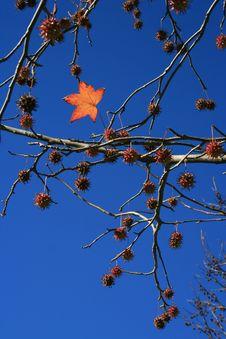 Free Bright Leaf Stock Photo - 14893260