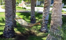 Hammock Under Palm Trees.