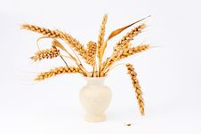 Ear Of Ripe Wheat Falling Granule In Ceramic White Royalty Free Stock Photography