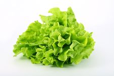Free Lettuce Green On A White Background Royalty Free Stock Images - 14893809