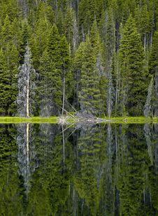 Free Inkspot-Yellowstone Psychology Stock Photos - 14894283