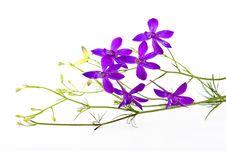 Free Flower Arrangement Royalty Free Stock Image - 14894716
