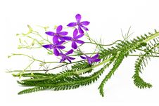Free Flower Arrangement Royalty Free Stock Photo - 14894725