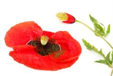 Free Flower Arrangement Stock Photography - 14894762