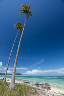 Free Beautiful Beach And Coconut Trees Stock Photography - 14894792