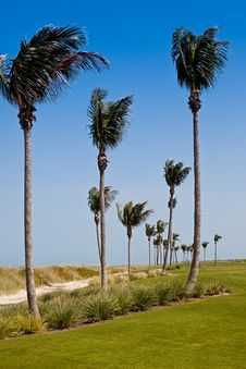 Free Golf Course In Florida Stock Images - 14894964