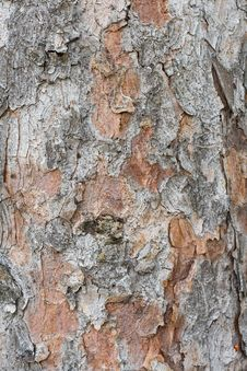 Free Pine Bark Royalty Free Stock Images - 14894999