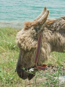 Free Donkey Stock Photos - 14895613